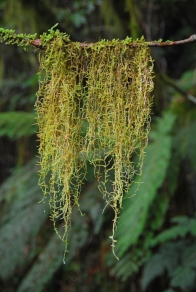 Regenwaldimpression, Alex Knob Track (Foto: Helga Ehrecke)